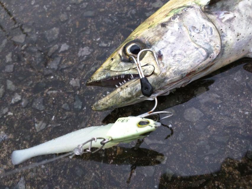 持って帰った魚の身が白く濁る&ブヨブヨになる、原因は何?