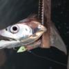 ワインド釣法のタチウオタックルの詳細