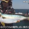 ライン強度と魚のサイズの関係性、魚種別まとめ